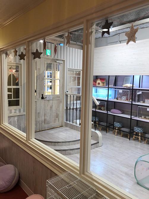ガラス越しに見えるのはオーナー様DIYの棚!皆で力を合わせて作ったお店です。
